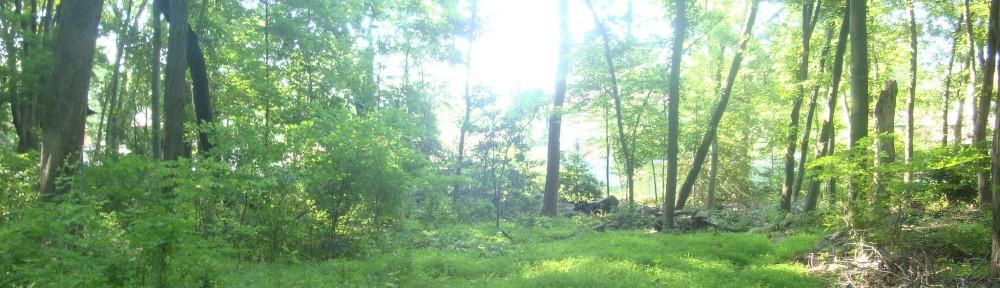 Trail-Hike-Life
