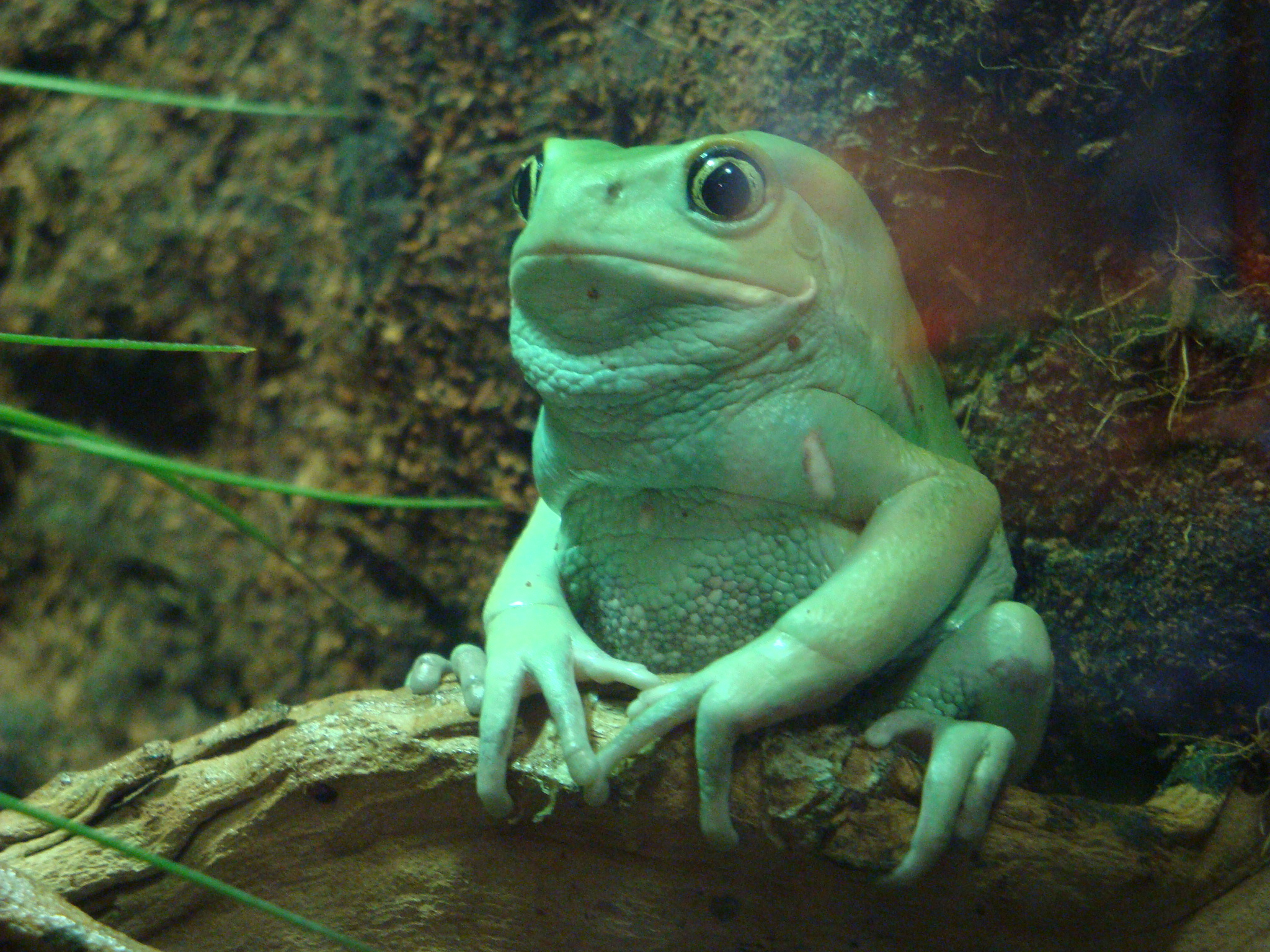 He is actually a frog who resides at the Camden Aquarium. He looks a ...