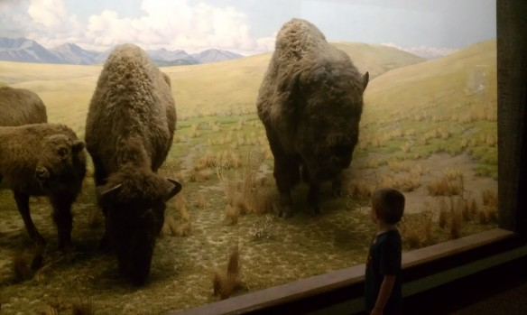 Stuffed Bison