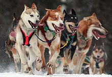 220px-Iditarod_Ceremonial_start_in_Anchorage,_Alaska