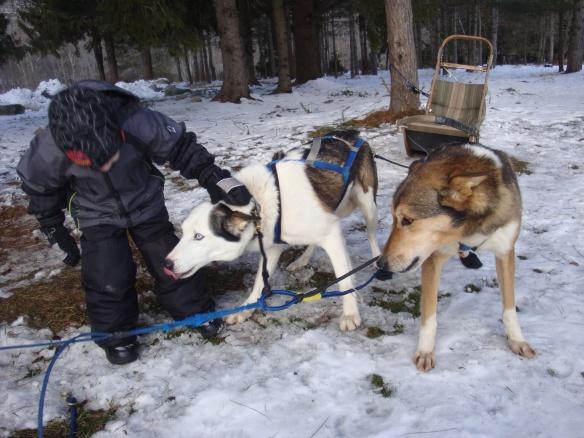 Dog Sledding 005