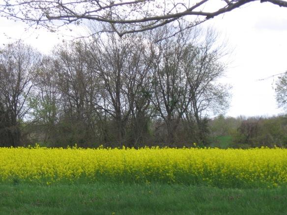 Yellow 002