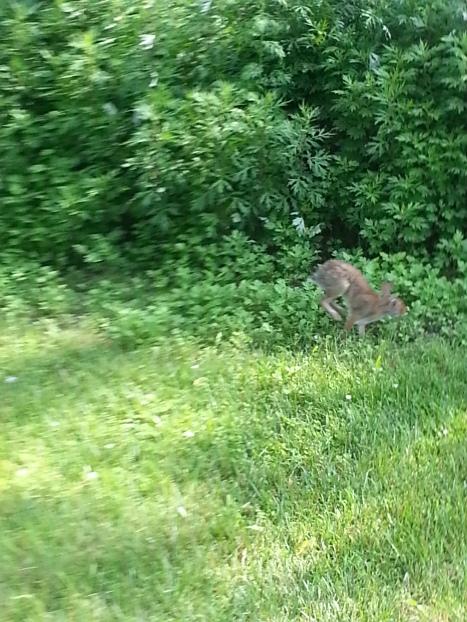 wow wabbits